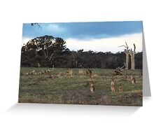 They were llooking back to see if I was looking back to see if they were looking back at me. Greeting Card