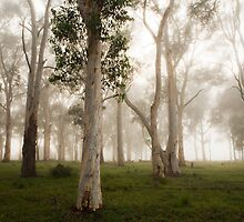 Misty forest by PeterDamo