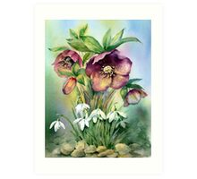 Snowdrops and Hellebores Art Print