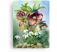 Snowdrops and Hellebores Canvas Print