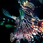 Black lion fish - Lembeh Straits by Stephen Colquitt