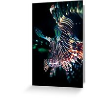 Black lion fish - Lembeh Straits Greeting Card