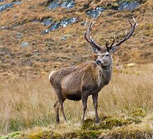 Impressive Antlers by markyboy1967