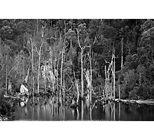 Drowned trees Photographic Print
