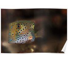Box fish - Lembeh Straits  Poster