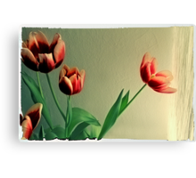 Red Tulips Polaroid Canvas Print