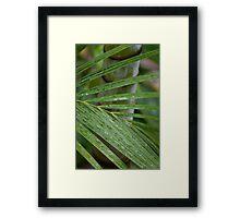 Palm Foilage Framed Print