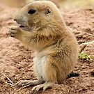 Baby Prairie Dog by Vanwraithen