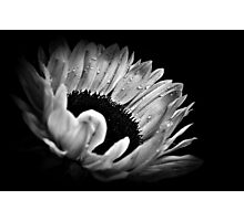 Sunflower Droplets. Photographic Print