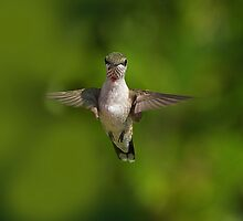 Humming Bird Checking Me Out by imagetj