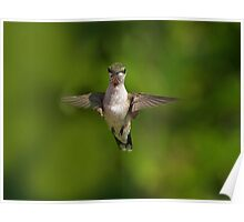 Humming Bird Checking Me Out Poster