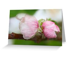 Sweet pink appletree blossoms Greeting Card