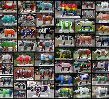 ALL 62 Rhino's by AnnDixon