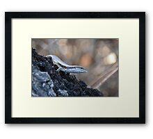 Skink Eye Framed Print