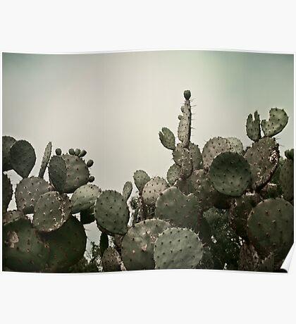 Southwest Cactus Poster