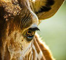 Eye Level - Giraffe at a Virginia Safari Park by Stephen Gagne