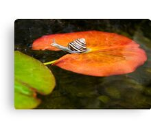 Snail on Lilypad Canvas Print
