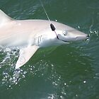 I'm Hooked! Blacknose Shark by Missy Yoder