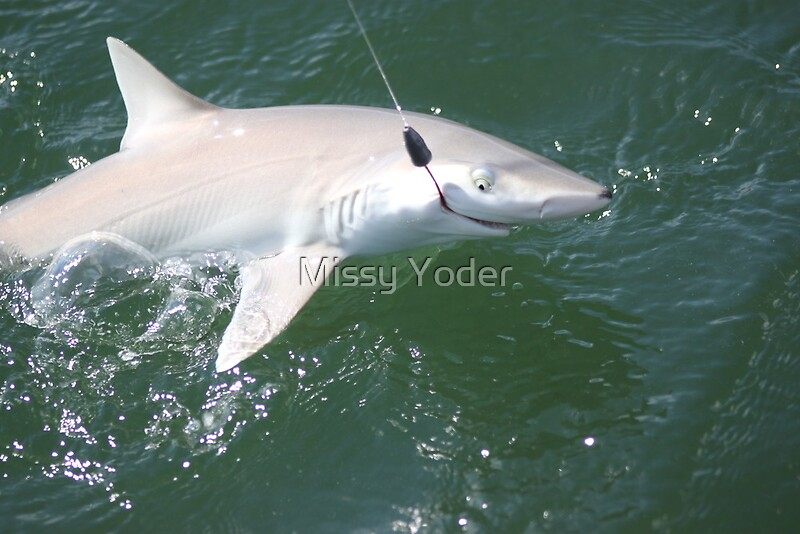 quotim hooked blacknose sharkquot by missy yoder redbubble
