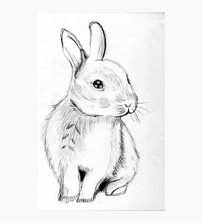 Bluebell the Fluffy White Bunny Photographic Print
