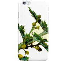 wattle buds iPhone Case/Skin