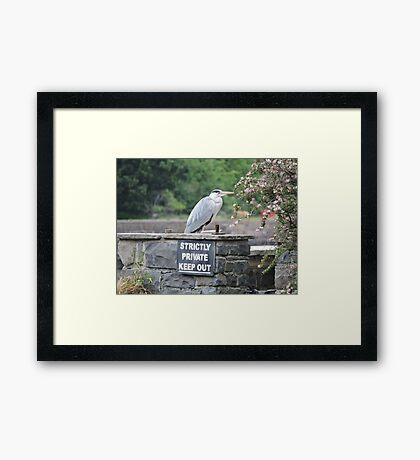 Herons Don't Read Framed Print