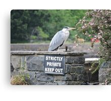 Herons Don't Read Canvas Print
