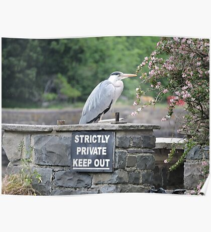 Herons Don't Read Poster