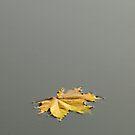 My Autumn Loneliness by Ethem Kelleci