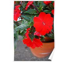 Beautiful Vibrant Flowers Poster