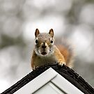 Rooftop guest by camerahappy