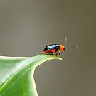Not a Lady Bug by Penny Odom