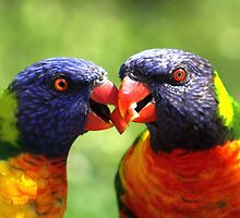 Love Birds by Jo Nijenhuis