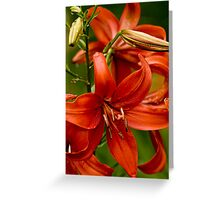 "Asiatic Lily ""Red Tiger"" Greeting Card"