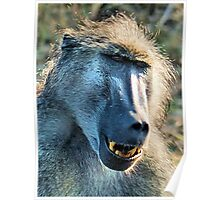 WHAT'S SO FUNNY! - CHACMA BABOON – Papio ursinus Poster