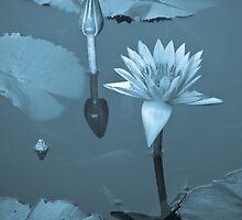 Water Lily Dreams by ElyseFradkin
