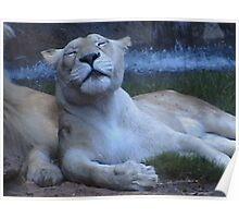 Morning glory animal life Poster
