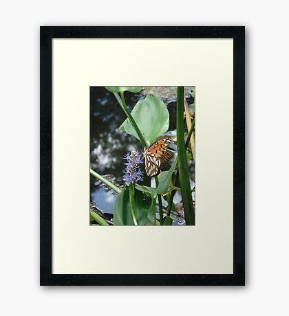 GULF FRITILLARY ON PICKEREL WEED Framed Print