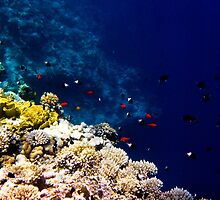 Red Sea 413 by Martin  Lidyard