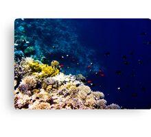 Red Sea 413 Canvas Print