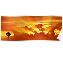 One Palm at Sunset Poster