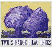 Two strange lilac trees Photographic Print
