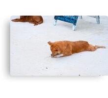 Sleeping Island Dog Canvas Print