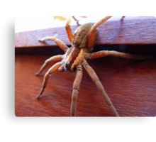 Come in to my Lair! - Spider - NZ - Southland Canvas Print