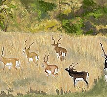The Magnificent Seven by Carole Boyd