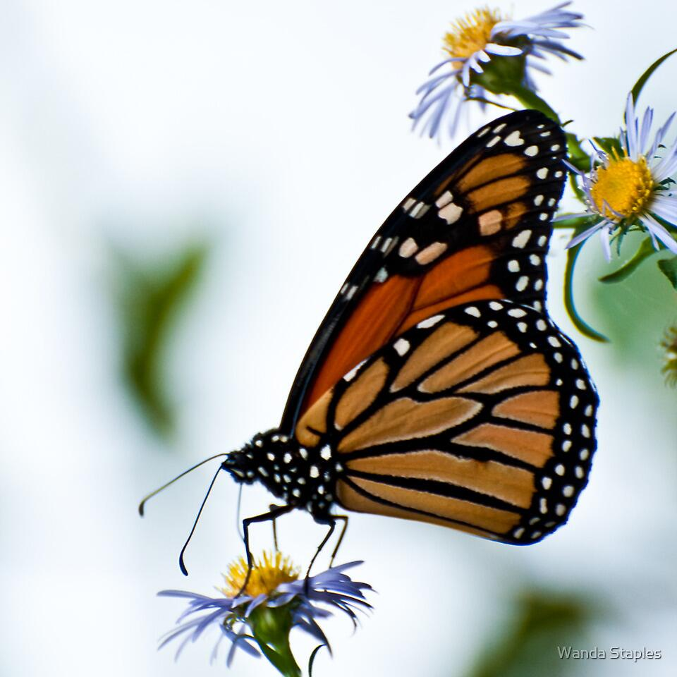The Monarch Miracle by Wanda Staples