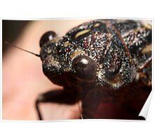 I Cicada Poster