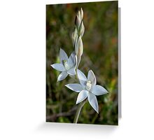 Thelymitra aggricola - BLEAK SUN ORCHID Greeting Card