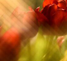 Tulip in the Spotlight Sticker