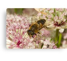 A bee in clover Canvas Print